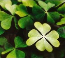 luck-clover